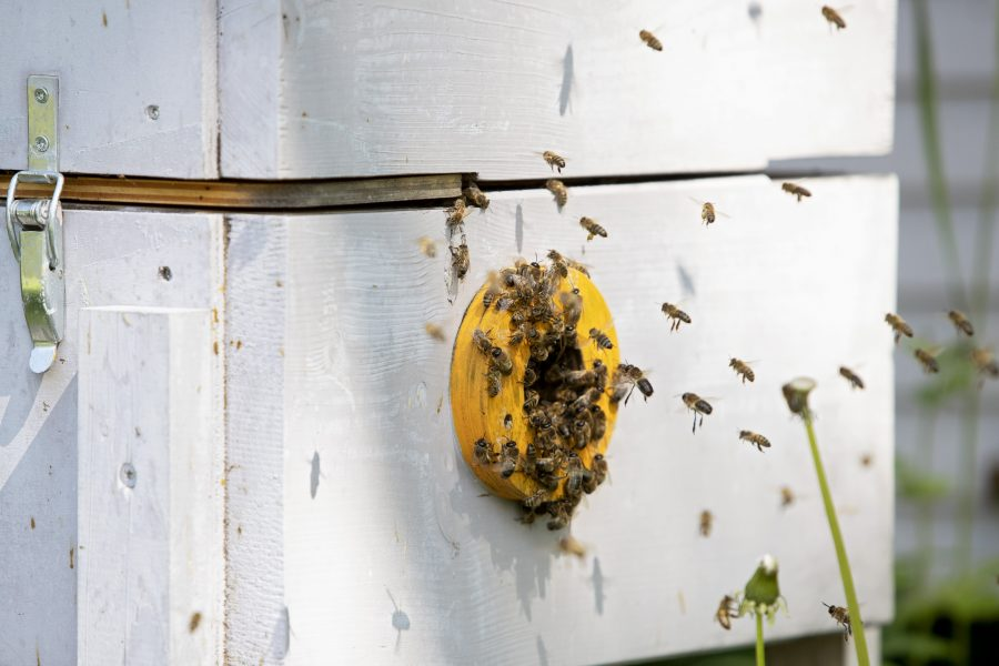 Plast kan vara byggmaterial för bin.