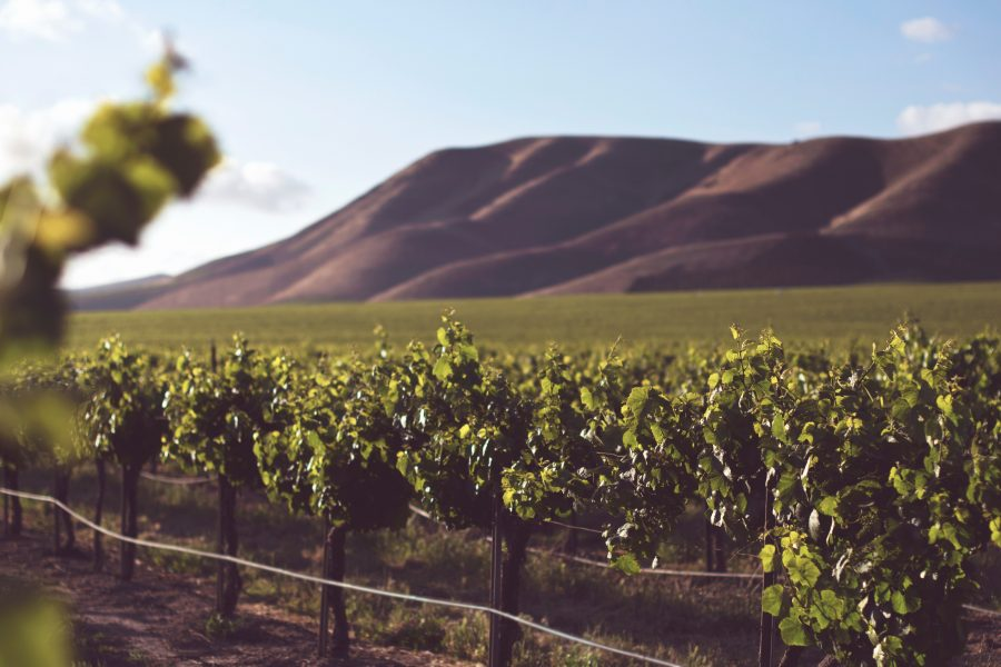 I Kalifornien domineras jordbruket av stora gårdar som har fokus på kortsiktig produktivitet, ofta på bekostnad av miljön och människors hälsa.