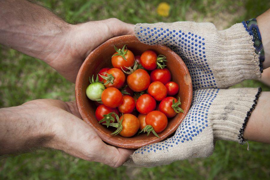 Årets tema på Göteborgs största hållbarhetsfestival – som börjar 30 oktober – är hållbar mat.