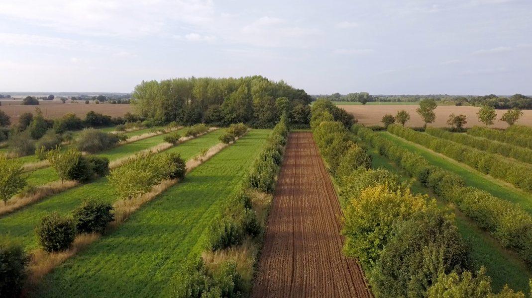 Alléodling i Suffolk, ur Maja Lindströms film Agroforestry.