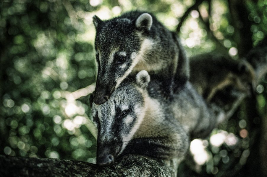 Växt- och djurlivet i Pantanal i södra Brasilien hotas av en kraftig brand.