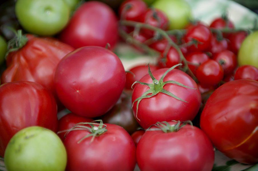 En forskargrupp i Mellanöstern har upptäckt att det går bra att vattna tomater med saltvatten om man tillsätter en särskild svamp i jorden.