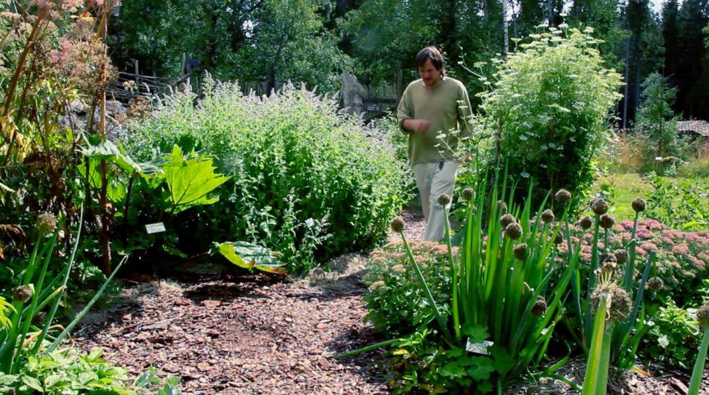Viktor Säfve har tillsammans med sin partner Elin byggt upp en skogsträdgård med en rik variation av perenna arter.