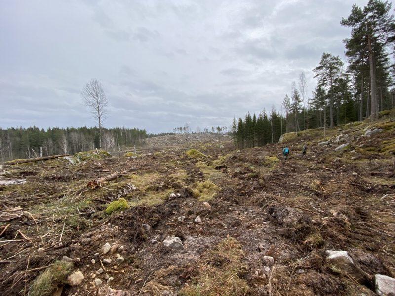 Skogsbolaget Södra har avverkat skog som direkt förstört eller allvarligt skadat nyckelbiotoper, värdekärnor och skogar som ingår i Länsstyrelsens reservatsförslag vid sjön Risten i Åtvidabergs kommun i Östergötland.