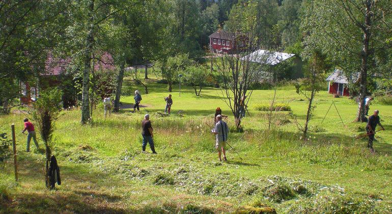 Tures äng i Borlänge kommun är ett av de 23 nybildade naturreservaten i Dalarna.