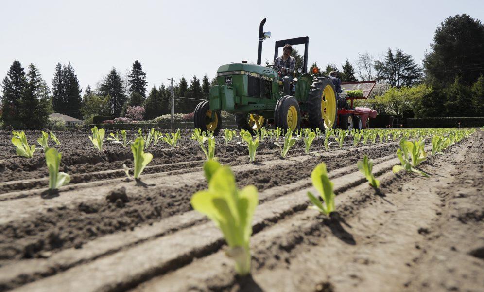 Österrike vill hitta lokala arbetare till arbeten inom jordbrukssektorn som oftast utförs av utländsk arbetskraft.