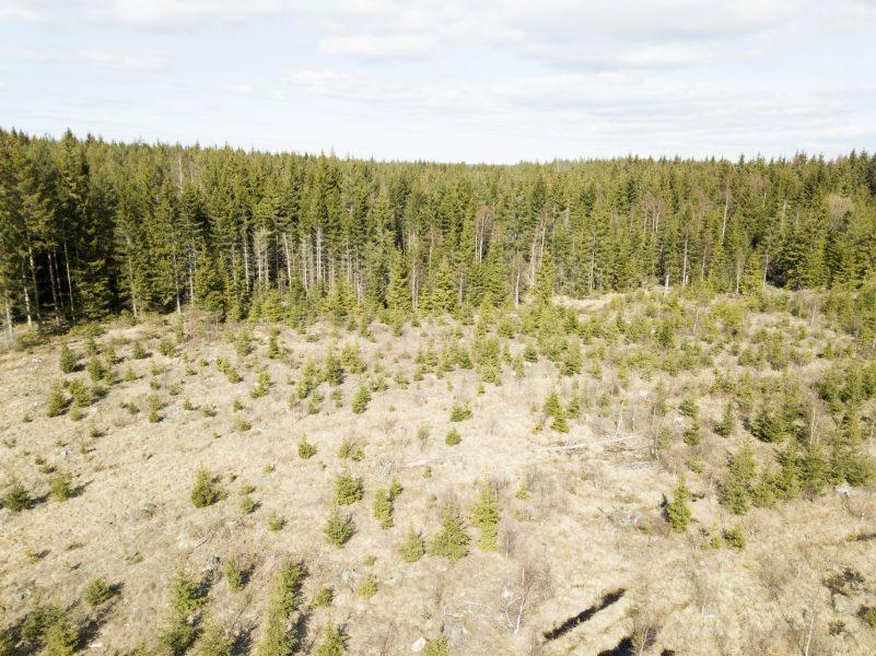 XR protesterar mot att Sveriges största skogsägare, Sveaskog avverkar skogar med höga naturvärden, som behövs för den biologiska mångfalden och för klimatet eftersom de lagrar mycket kol i marken.