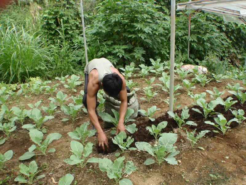 Intresset för ekologisk odling ökar i världen.