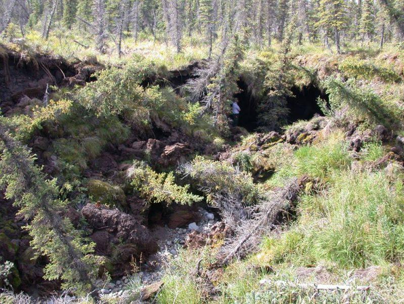 En stor bit av vegetationen på tundran i nordvästra Alaska har rasat ned när permafrosten tinat.