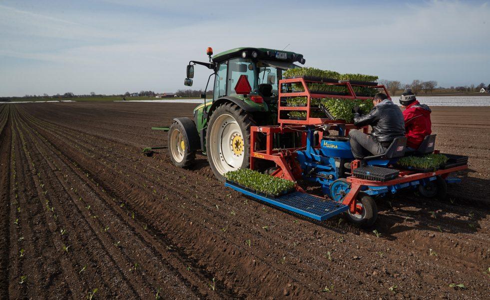 Målet med den nationella livsmedelsstrategin är att öka vår inhemska livsmedelsproduktion.