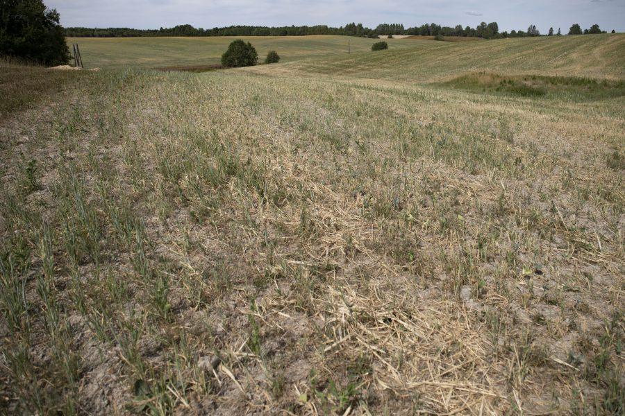 Sommaren 2018 rådde torka i stora delar av Sverige.