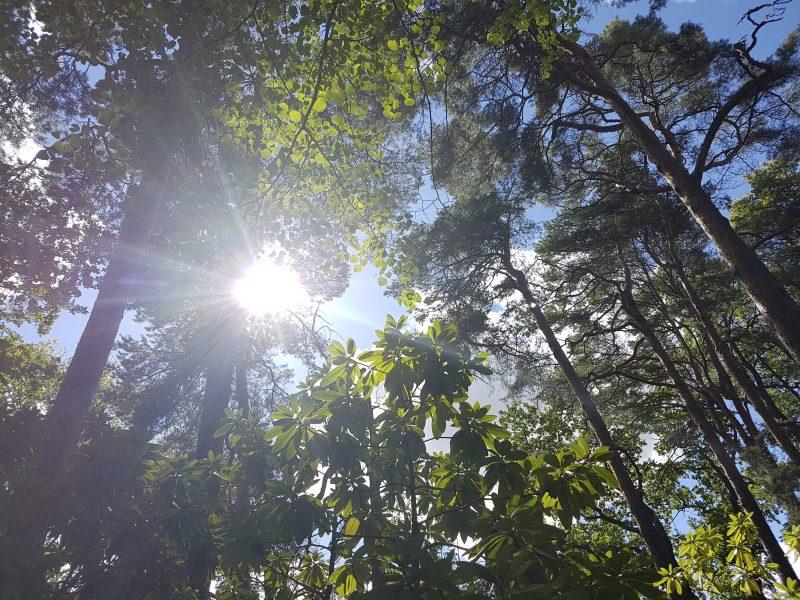 Vuxenblivande innebär bland annat att kunna respektera andra som egna subjekt, även ickemänskliga arter och superorganismer som exempelvis skogar, liksom att förstå komplexa system.