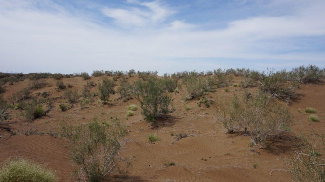 Ökenstäppen i södra Gurbantunggutöknen, där mindre än 30 % är vegetationstäckt.