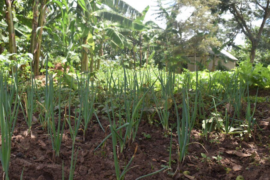 Agroforestry minskar risken för jorderosion och näringsläckage, och främjar växt- och djurlivet.