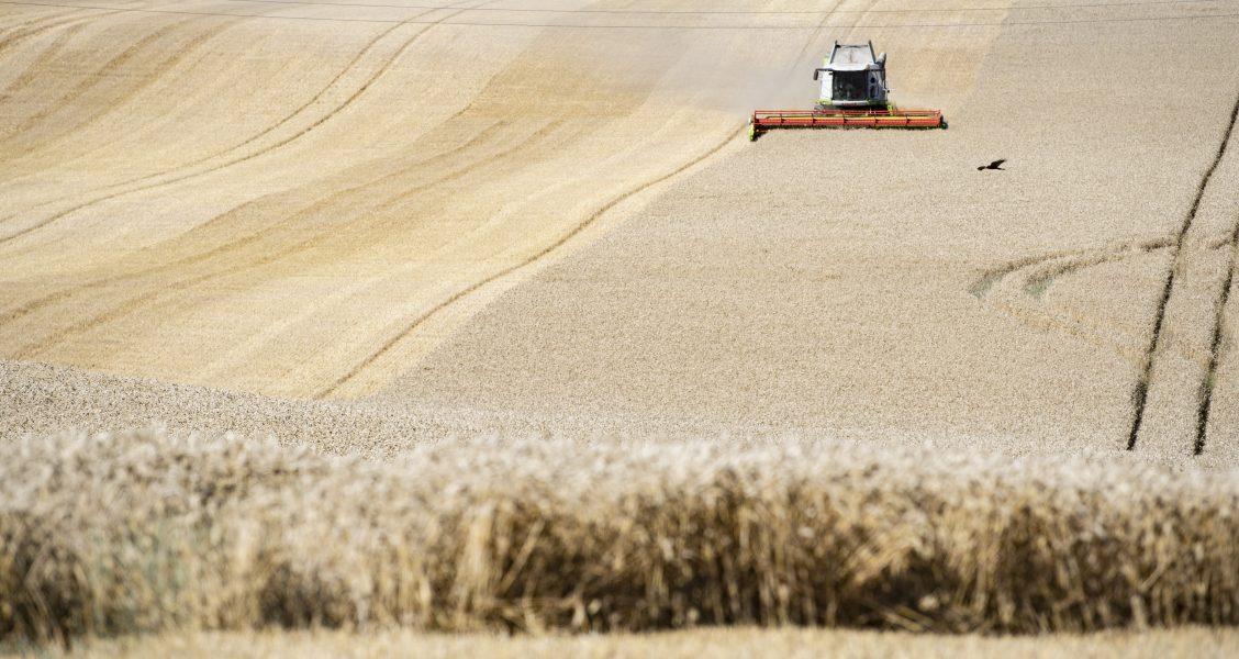 Intensivt jordbruk är en av anledningarna till minskadbiologiskmångfaldi EU, enligt rapporten State of the Nature in the EU.