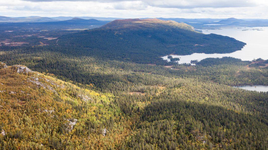 Iksjak, ett stort sammanhängande naturskogsområde strax norr om Arjeplog.
