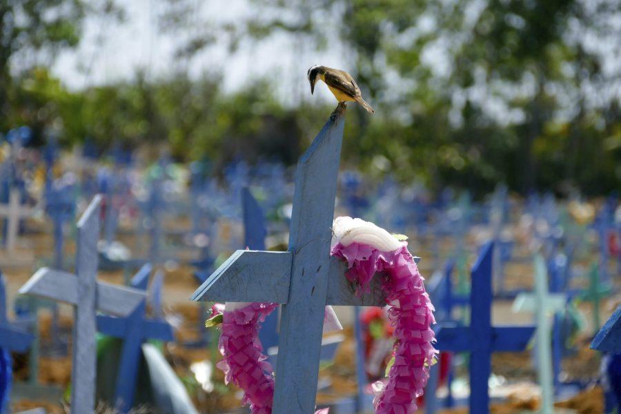 En gravplats för personer som dött i covid-19 i Manaus, Brasilien.