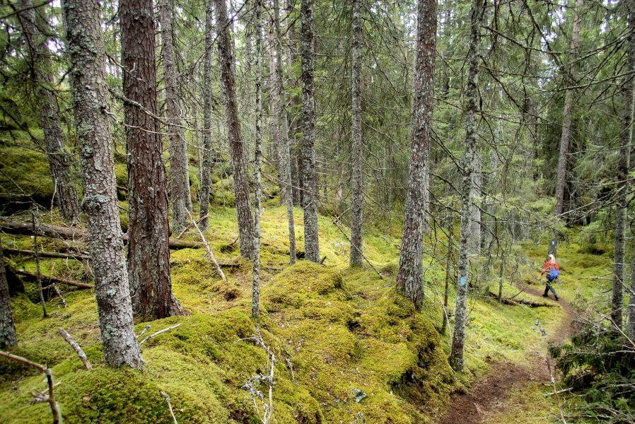Sundays for Forests vill uppmärksamma förlusten av biologisk mångfald i skogen.
