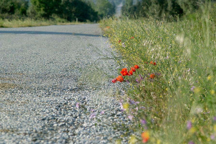 Genom att skötas rätt kan vägkanter gynna många av de insekter som håller på att försvinna.