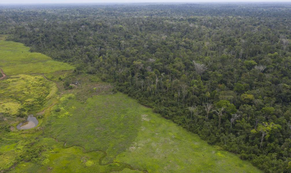 Skövlad mark i Amazonas gränsar till regnskog som ännu står kvar.