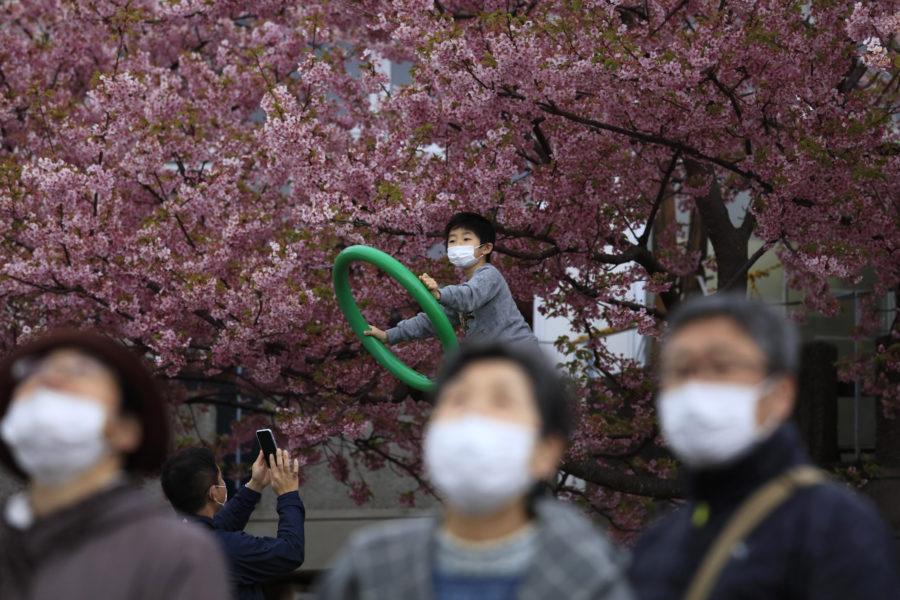 Blommande körsbärsträd i Japan, här i Tokyo i fjol.