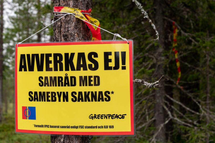 Greenpeace är i Muonio sameby på obestämd tid.