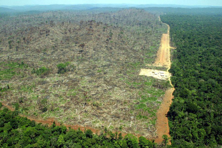 Ökad avskogning i Amazonas kan bli följden av ett nytt frihandelsavtal.
