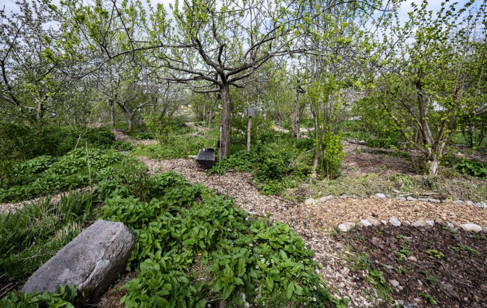 Skogsträdgårdar är en av de saker som står i fokus på det läger med skogstema som Biotopbyggarna anordnar utanför Hedemora i slutet av september.