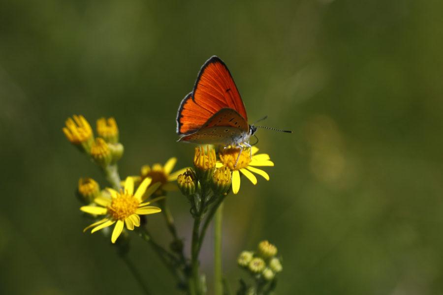 Upp till en miljon av världens växt- och djurarter hotas av utrotning.